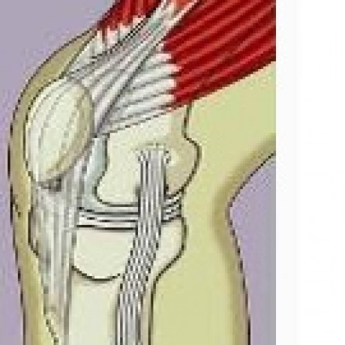 Management of Anterior Knee Pain and Related Knee Injuries