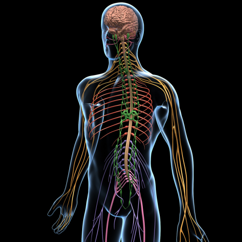 Neural Tissue Pain Disorders